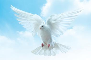 НАЦИОНАЛЬНАЯ ИНТЕРНЕТ-ПРЕМИЯ «НА БЛАГО МИРА!». ИНТЕРНЕТ-ПЛАТФОРМА. СНГ