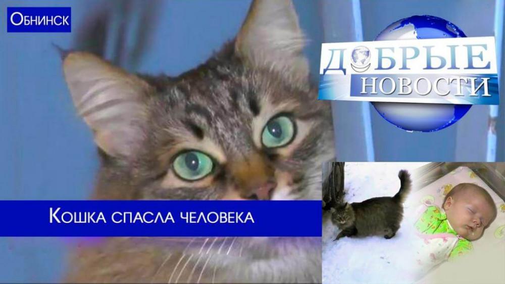 Высшие морально-нравственные качества способна проявить даже кошка