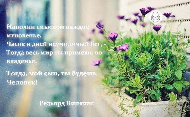 """Стих """"Рассуждения о себе, навеянные прочтением книг А. Новых"""""""