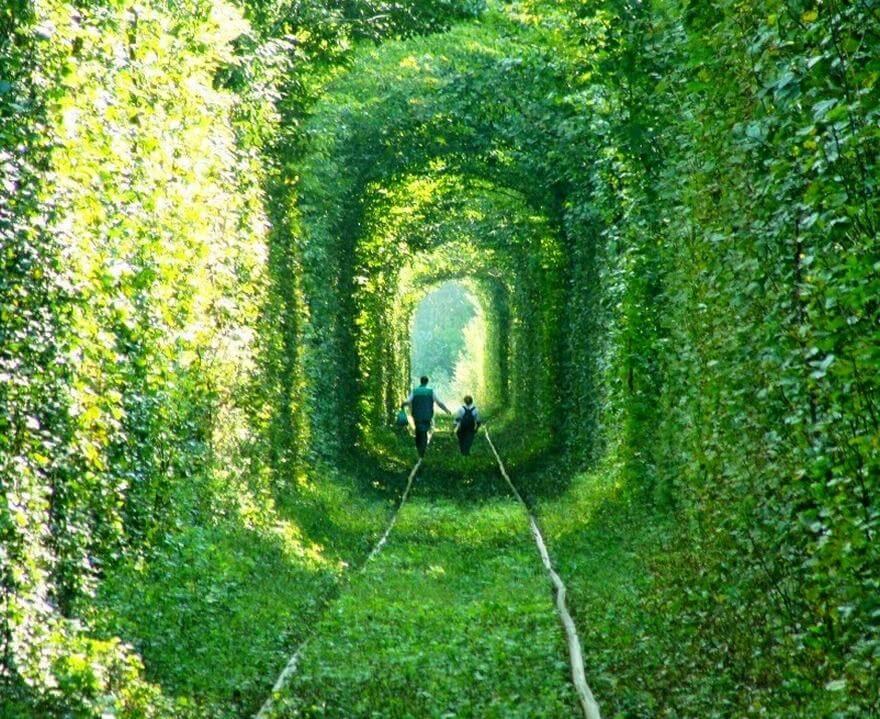 Раскрасим мир в зелёные тона