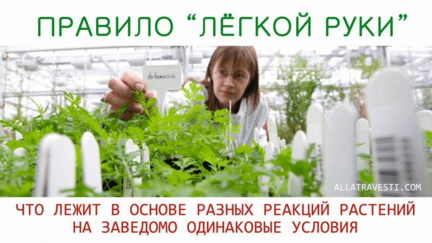 Правило «ЛЁГКОЙ РУКИ» или что лежит в основе разных реакций растений на заведомо одинаковые условия