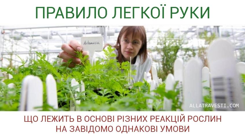 """Правило """"ЛЕГКОЇ РУКИ"""" або що лежить в основі різних реакцій рослин на завідомо однакові умови"""