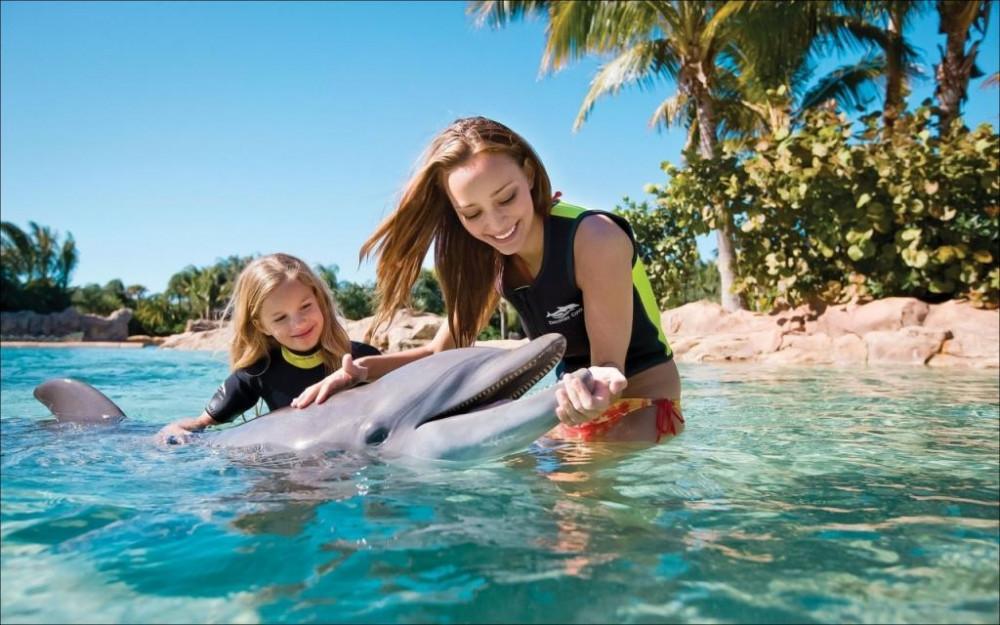 Чому можна повчитися у дельфінів?