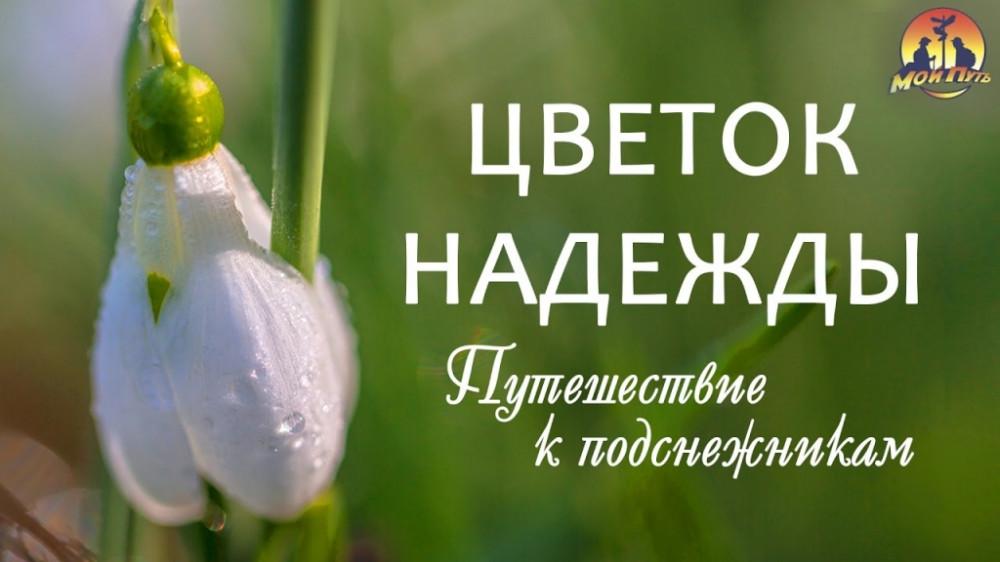 Квітка Надії. Подорож до підсніжників