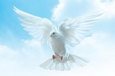 НАЦІОНАЛЬНА ІНТЕРНЕТ-ПРЕМІЯ «НА БЛАГО СВІТУ!». ІНТЕРНЕТ-ПЛАТФОРМА. СНД