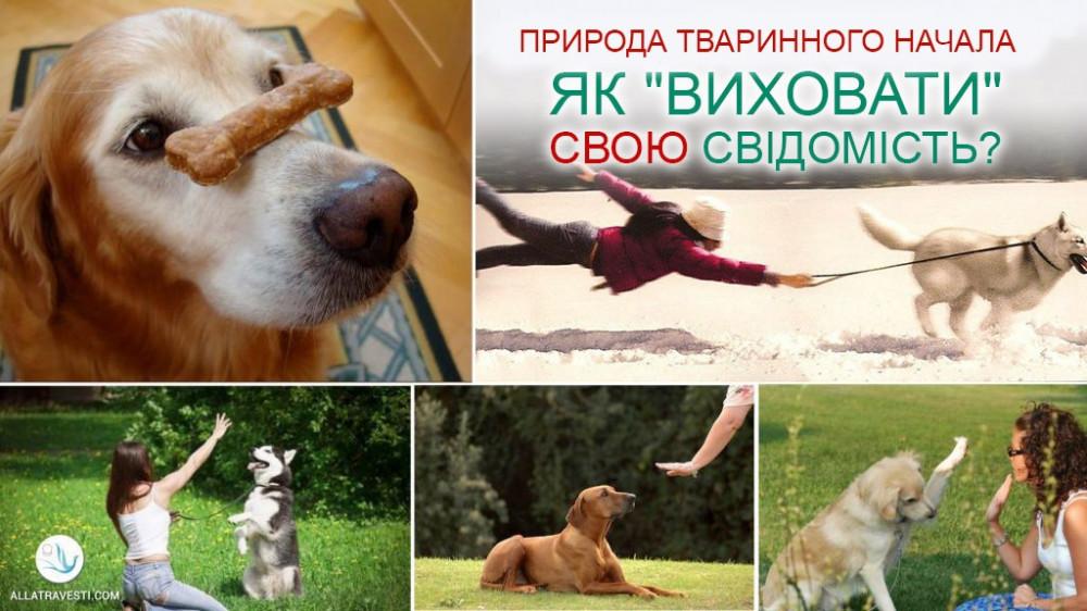 """Природа Тваринного начала. Як """"виховати"""" свою свідомість?"""