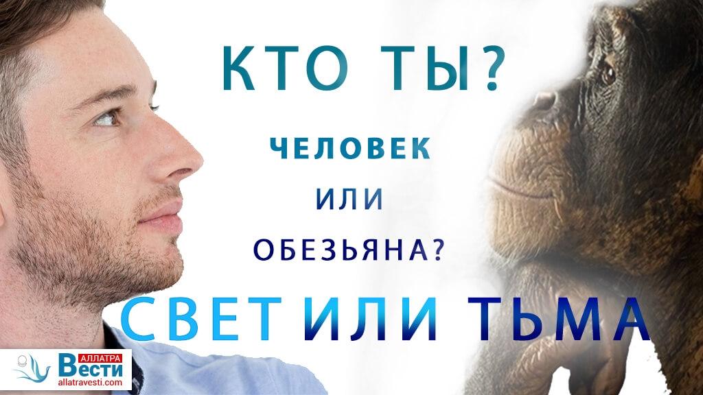 <mark><b>Человек</b></mark>  и обезьяна — сходства и отличия.  <mark><b>Выбор</b></mark>  между светом и тьмой