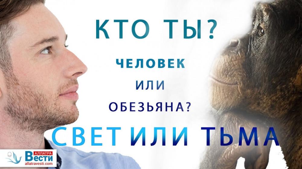 Человек и обезьяна — сходства и отличия. Выбор между светом и тьмой